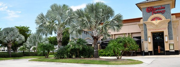 Commercial Landscaping<br>Cheesecake Factory, Naples Florida