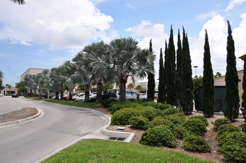 Landscaping Lawn Maintenance Cheesecake Factory Naples